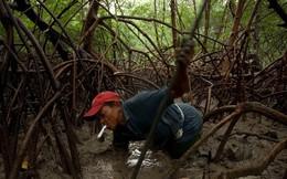 24 bức ảnh cho thấy rừng Amazon từ lá phổi xanh của thế giới đã trở thành chứng tích cho sự tàn phá của con người