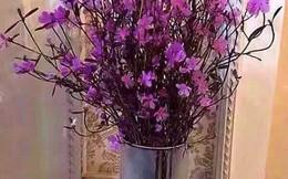 Bà nội trợ Hà thành 'phát sốt' với hoa 'đỗ quyên ngủ đông' như bó củi khô giá 200 nghìn đồng
