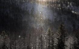 """Thời tiết lạnh giá, người dân Nhật Bản háo hức chiêm ngưỡng khung cảnh """"bụi kim cương"""" đẹp như trong cổ tích"""