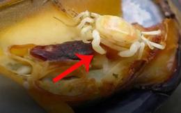 Đừng sợ nếu thấy con này khi đang ăn hàu, vì bạn rất may mắn đấy!