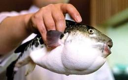 Dân Nhật lo sợ vì cá cực độc lọt ra siêu thị