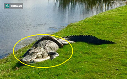 Bất phân thắng bại: Trăn mốc quấn chặt cá sấu trên sân golf ở Mỹ