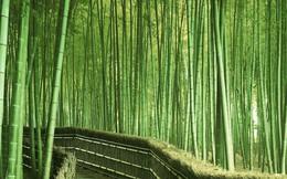 Trung Quốc tham vọng trồng rừng quy mô lớn, diện tích to bằng cả Ireland nhằm bảo tồn hệ sinh thái
