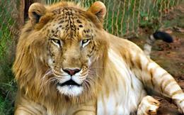 """12 """"hoàng tử lai"""" trong thế giới động vật với ngoại hình ngầu lòi và cá tính"""