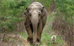 Khi động vật cũng biết nuôi thú cưng - những câu chuyện chứng minh thế giới tự nhiên cũng có thể dễ thương đến khó tin