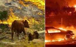 """Là thảm họa với con người, nhưng lại có những """"đối tượng"""" rất thích cháy rừng"""