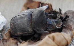 Cận cảnh xác ướp bọ hung và mèo bên trong ngôi mộ Ai Cập 4.500 năm tuổi