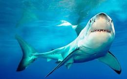 Liệu cá mập có phải là kẻ sát nhân?