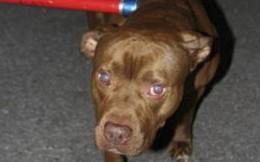 Kinh hoàng chó nhà nửa đêm trèo vào cũi cắn chết bé gái 5 ngày tuổi ở Mỹ