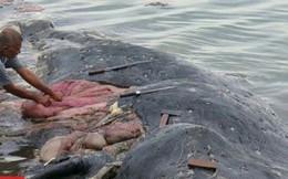 Cá nhà táng trôi dạt vào bờ biển, mổ bụng con vật, ai cũng kinh ngạc khi thấy những thứ bên trong