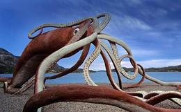 Loài động vật thân mềm to lớn và thông minh nhất biển sâu