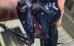 Những sinh vật kì dị nhất từng được bắt lên từ đáy biển, ai yếu tim quá không nên xem (Phần 3)