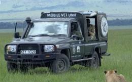 Cứu sư tử con bị đầu độc, đoàn làm phim BBC vô tình vi phạm một trong những quy tắc quan trọng với thiên nhiên hoang dã