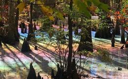 Đầm lầy 7 sắc màu pastel gây sốt mạng xã hội, chuyên gia khẳng định 100% nguồn gốc tự nhiên