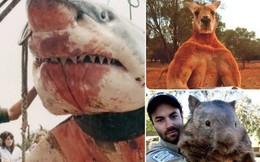 """Không chỉ có bò """"The Rock"""", nước Úc còn là nơi đầy rẫy quái vật khổng lồ ai nhìn cũng hãi"""