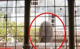 Mở cửa sổ phòng ngủ giữa đêm, cặp đôi 'sợ rớt tim' khi thấy 'đầu người' bên ngoài