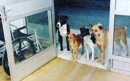 Hình ảnh cảm động: Người đàn ông vô gia cư nhập viện, 4 chú chó hoang đứng mong chờ ngoài cửa