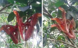 """Truy tìm nguồn gốc sinh vật giống """"rắn 3 đầu"""" đang gây bão: Hóa ra là loài tuyệt đẹp và khá phổ biến ở Việt Nam"""