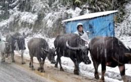 Dự báo thời tiết: Miền Bắc rét đậm dịp Tết dương lịch, khả năng băng giá và mưa tuyết