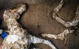 Phát hiện xác ngựa còn nguyên yên cương gần 2.000 năm sau thảm họa núi lửa Vesuvius