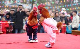 24h qua ảnh: Cuộc thi sắc đẹp dành cho gà ở Trung Quốc
