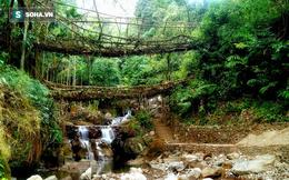 Cầu 2 tầng bằng rễ cây sống đứng sừng sững qua mấy thế kỷ