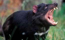 Những loài động vật có lực cắn mạnh nhất thế giới