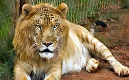 """Những """"hoàng tử lai"""" đẹp đến ngỡ ngàng trong thế giới động vật"""