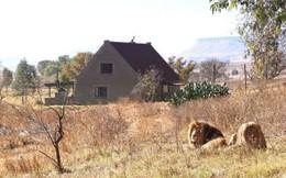 Sống thử trong căn nhà bị 77 con sư tử vây quanh