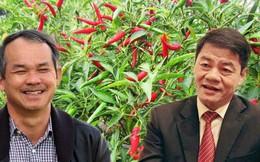 Mỗi ngày trả lãi vay 4 tỷ, Hoàng Anh Gia Lai vay thêm 746 tỷ từ Trường Hải