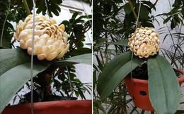 Sự thật về bông hoa trắng lạ, không ai biết tên đang gây xôn xao mạng xã hội