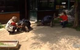 """Đôi rùa khổng lồ không nhìn mặt nhau sau 115 năm chung sống: """"Đến rùa cũng không chịu được lời vợ cằn nhằn"""""""