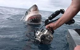 """Liều mình chụp cận cảnh hàm răng """"tử thần"""" của cá mập trắng"""