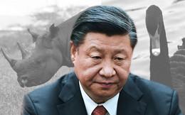 Thiên nga đen và tê giác xám: Hai mối lo Trung Quốc phải đối mặt trong năm 2019