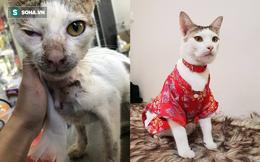 4 tuần hồi sinh kỳ diệu của chú mèo suýt lìa cổ, thịt thối rữa thành thú cưng sang chảnh