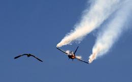 Phi công F-16 Pakistan bị chính dân địa phương đánh đến chết vì nhầm là người Ấn Độ!