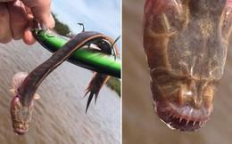 """Ngư dân Úc bất ngờ câu được """"thủy quái"""" hình dáng kỳ lạ: Mắt mù, răng nhọn"""