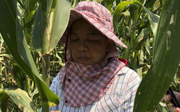 An ninh lương thực châu Á trước hiểm họa mới