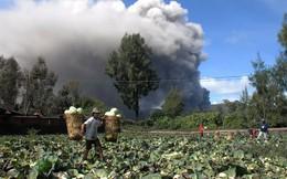 24h qua ảnh: Nông dân Indonesia thu hoạch bắp cải gần núi lửa đang hoạt động