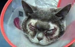 Đưa mèo cưng đi cắt mí, người phụ nữ Trung Quốc bị chỉ trích gay gắt