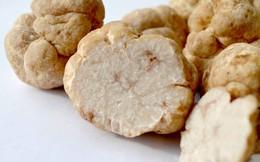 """Nấm truffle: Nguyên liệu được xưng tụng là """"thần thánh"""" của các nhà hàng hạng sang, có giá lên đến 1 tỷ cho khoảng 2 kg"""