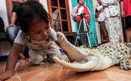 Bé gái 3 tuổi tắm, chơi và ngủ với cá sấu cưng mỗi ngày, còn có 'bạn' là trăn, bọ cạp