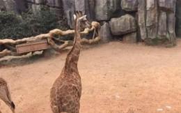 Tham quan vườn thú, du khách ném vài chục triệu đồng vào chuồng động vật với lí do bất ngờ