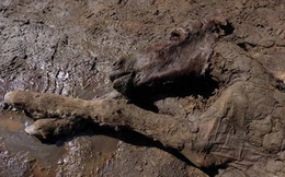 Phát hiện xác ướp ngựa hơn 40.000 năm tuổi, vẫn còn nguyên máu và nước tiểu
