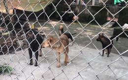 Cận cảnh đàn chó cắn bé trai 7 tuổi tử vong ở Hưng Yên