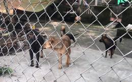 """Vụ đàn chó cắn bé trai tử vong, Trưởng CAH Kim Động: """"Không xác định được chính xác con chó nào tấn công"""""""