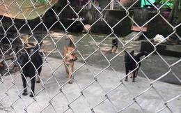 Hà Nội tăng cường bắt chó thả rông, không rọ mõm và xử phạt nặng chủ
