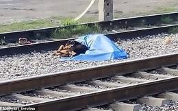 Chủ nhân bị tàu đâm chết, chú chó nằm lì ở bên cạnh một bước cũng không rời