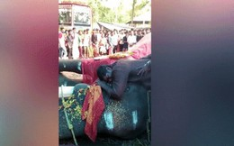 Người huấn luyện 'khóc như mưa' khi thấy voi chết