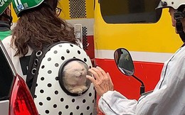 Bàn tay già nhăn nheo và biểu cảm của chú mèo trong balo khiến người đi đường thích thú
